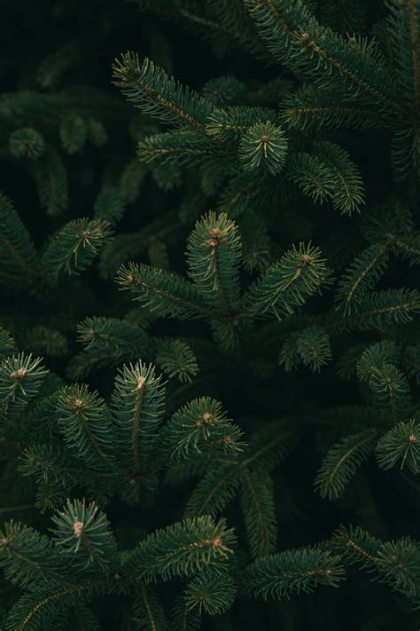 christmas tree images  hd pictures