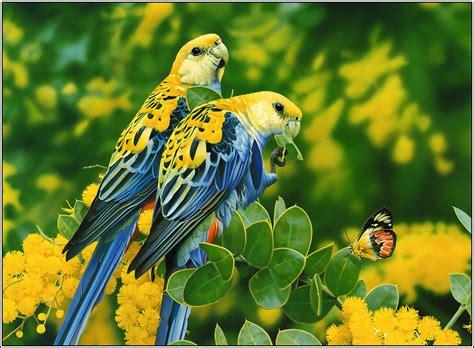 Animal And Bird Hd Wallpaper - 15 beautiful birds hd wallpapers 2013 beautiful