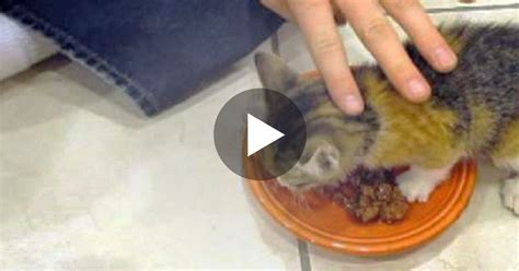 kitten gets food but when he starts eating now watch his