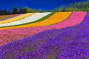 Top 15+ Flower Fields in the World World Top Top