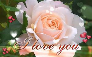 Funny Pictures Gallery: Love roses wallpapers, love rose ...