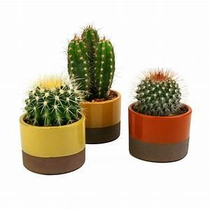 3 5 in Assorted Cactus Plant in Horizon Deco Pot (3-Pack