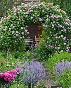 Rosen Für Rosenbogen : 25 best ideas about rosenbogen auf pinterest bambus im topf rosenbogen holz und rosengarten ~ Orissabook.com Haus und Dekorationen