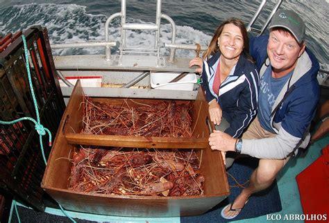 trip report april abrolhos islands day eco abrolhos