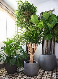 Plante D Intérieur Haute : deco plante interieur ~ Dode.kayakingforconservation.com Idées de Décoration