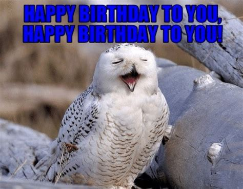 owl birthday memes wishesgreeting