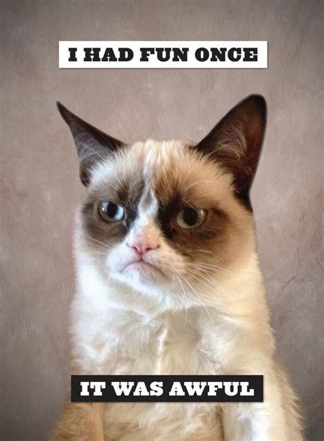 Grumpy Cat Meme I Had Fun Once - guys literally only want one thing starcitizen