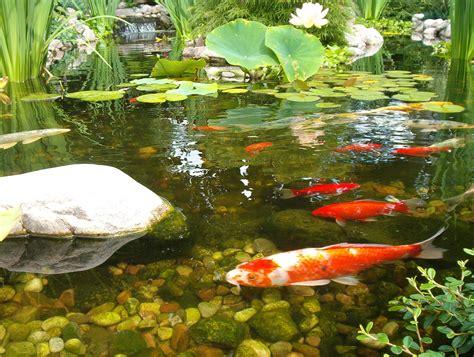 ponds pictures pond cedarrunlandscapes com