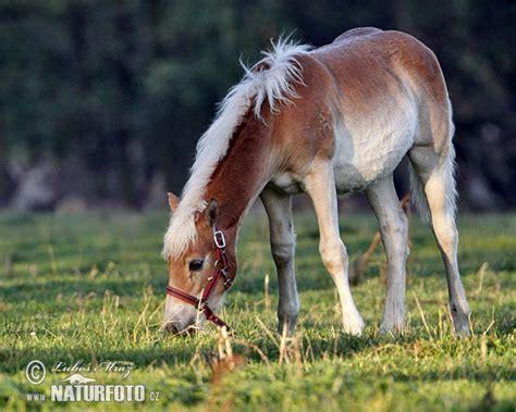 Mājas zirgs Fotogrāfijas, Bildes