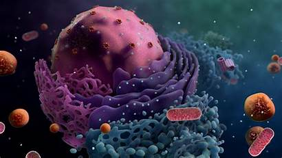 Cell Biology Biobeyond Nucleus Wallpapers Into Sciences