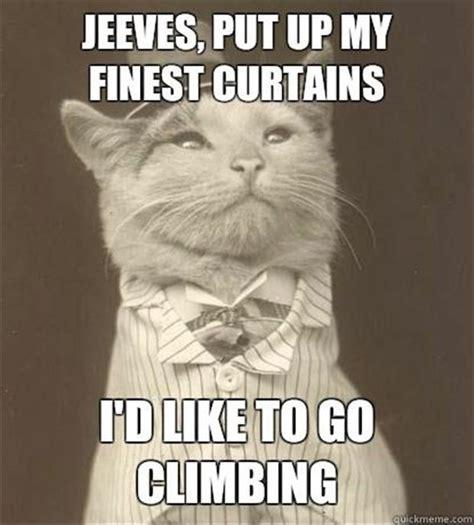 Meme The Cat - cat meme dump a day