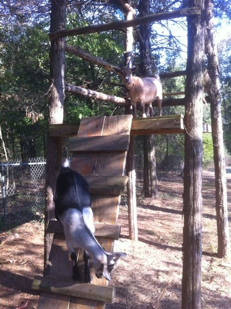 goats   tree house goat houses play grounds