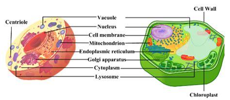 cellular biology biology central
