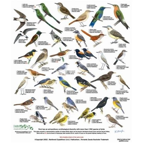 17 best images about birds n butterflies on pinterest
