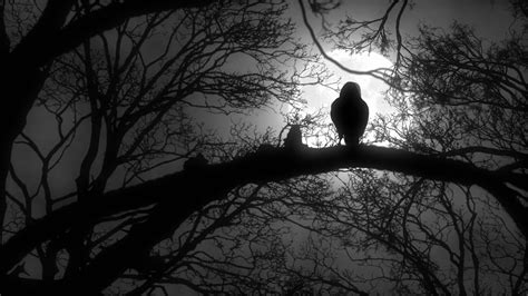 Scary Wallpaper Black And White by Scary Creepy Or Sitting On Tree Branch During A