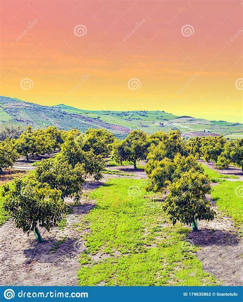 andalusia trees orange