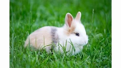 Rabbit Wallpapers Rabbits Bunnies 4k 1080p