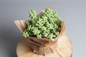 9, Cute, Small, Indoor, Plants
