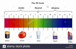 Diagram Of The Ph Scale With Examples Of Acidic  Neutral