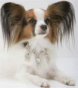 amour amour world39s most expensive dog collar luxury With expensive dog accessories