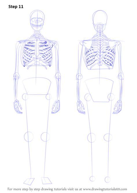 learn   draw  skeleton everyday objects step