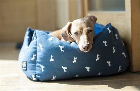 Glueckliche Haustiere Sauberkeit Und Erziehung by Was Hunde Nicht M 246 Hund Hunde Hunde Babys Und