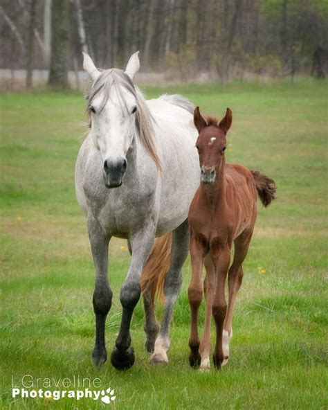 Spring Foals | Smith Falls Photography | Lynda Graveline's ...