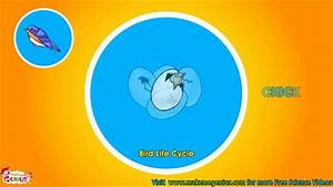 Bird Life Cycle Video For Kids
