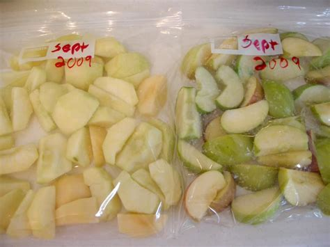 freezing apples     folks taught