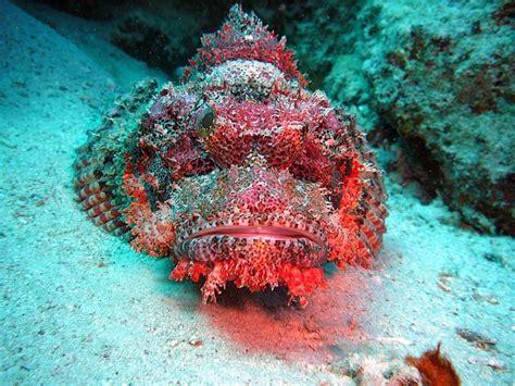 scuba diving sites   world   explore