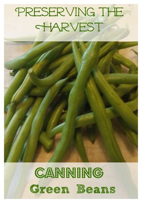 how to preserve green beans 116 best images about canning preserving on pinterest preserve peach jam and homemade