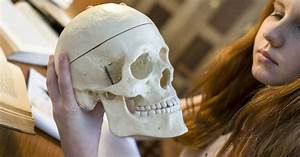 33 Label The Inferior Bones And Features Of The Skull