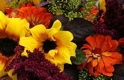 Fall Flowers Planting Plant Perennials Season Winter