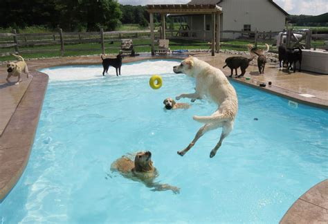 Puppy Pool Party!!