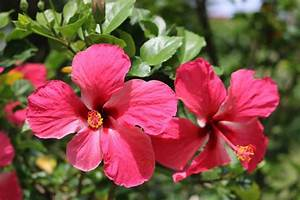 21 Types of Pink Flowers + Pictures | FlowerGlossary.com