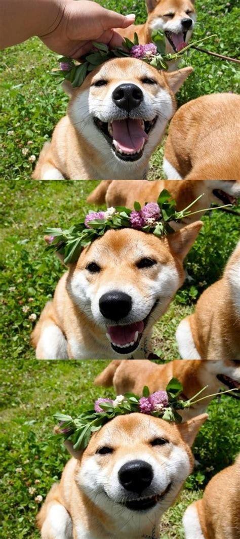 shibe  flower crown   sweet pinterest flower