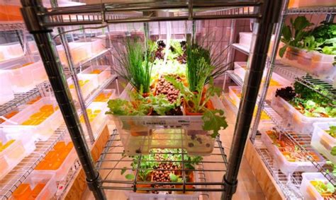 ikea indoor gardens produce food year for homes