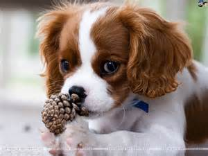 sweet dog - Dogs Picture