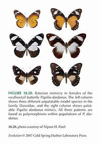 Examples Of Genetic Diversity In Animals