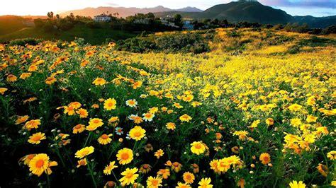 Schöne Gräser Für Den Garten die 70 besten hintergrundbilder fr 252 hling