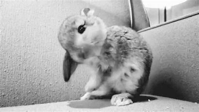 Adorable Bunny Gifs Giphy Rabbit Everything Kawaii