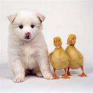 Cute Domestic Animals