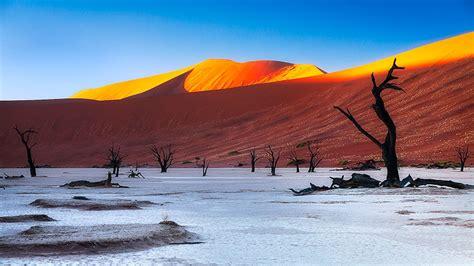 Tall Tree in Deadvlei | Namibia | Ken Koskela Photography LLC
