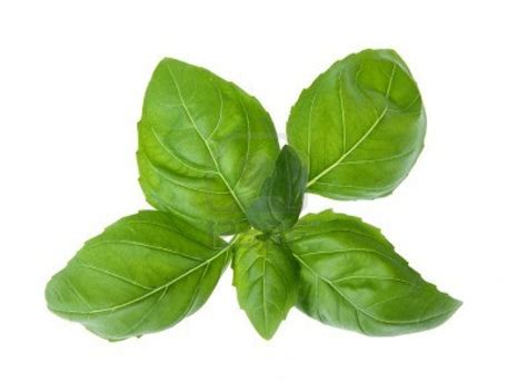 basil leaves pics 13 best home remedies for chest pain any solution makes you wow