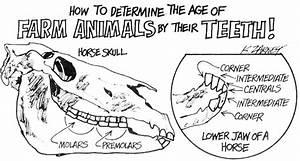 Homesteader U0026 39 S Guide To Farm Animal Dentistry  Estimating