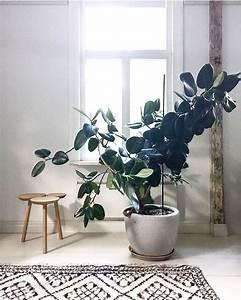 Grande Plante D Intérieur Facile D Entretien : les 25 meilleures id es de la cat gorie plante d 39 int rieur ~ Premium-room.com Idées de Décoration