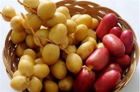 Distributor kurma muda di bekasi, menyediakan kurma muda merah, kurma muda kuning dan kurma muda hijau. Grosir kurma muda basah bandung |0811-2454-333| grosir ...