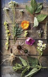 Healing Plants and Flowers List