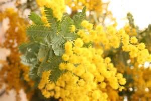 カクテル+ミモザ:flower: C'est jolie 美的花生活 ~ fleur Jolie R BLOG ~