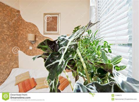 plante dans chambre à coucher pièce ensoleillée de chambre à coucher avec la lame de